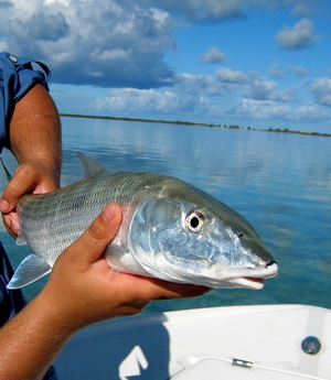 Bonefish in the Turks and Caicos Islands - photo by Marta Morton of Harbour Club Villas