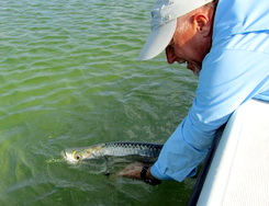 Tarpon caught and released on the bonefishing flats of Providenciales Turks and Caicos Islands